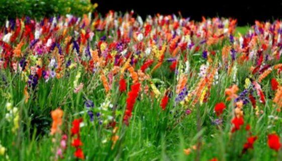 campo-di-fiori